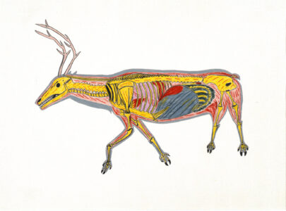 William Noah. Inuit (Baker Lake), 1943-2020. The Skeletoned Caribou, 1974. Coloured Pencil on paper. Collection of the WAG. Acquired through a grant from Hudson's Bay Oil and Gas Company.
